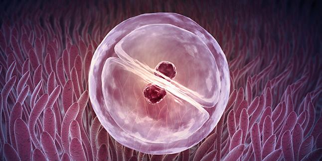Kısırlık ve Kök Hücre Tedavisi